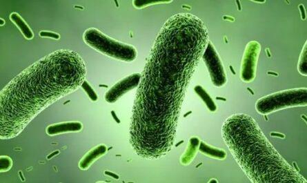 Jenis-dan-Peran-Bakteri-Bagi-Kehidupan-Manusia