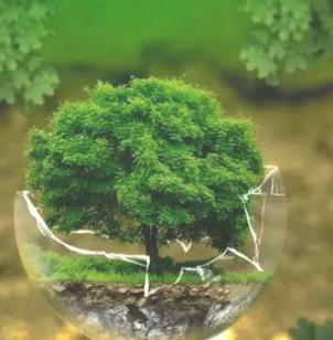 Lingkungan: definisi, jenis, elemen dan contoh